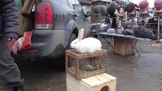 Кролики на рынке