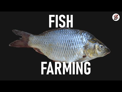 Fish Farming In Nigeria (+ Free Practical Training On Our Farm)
