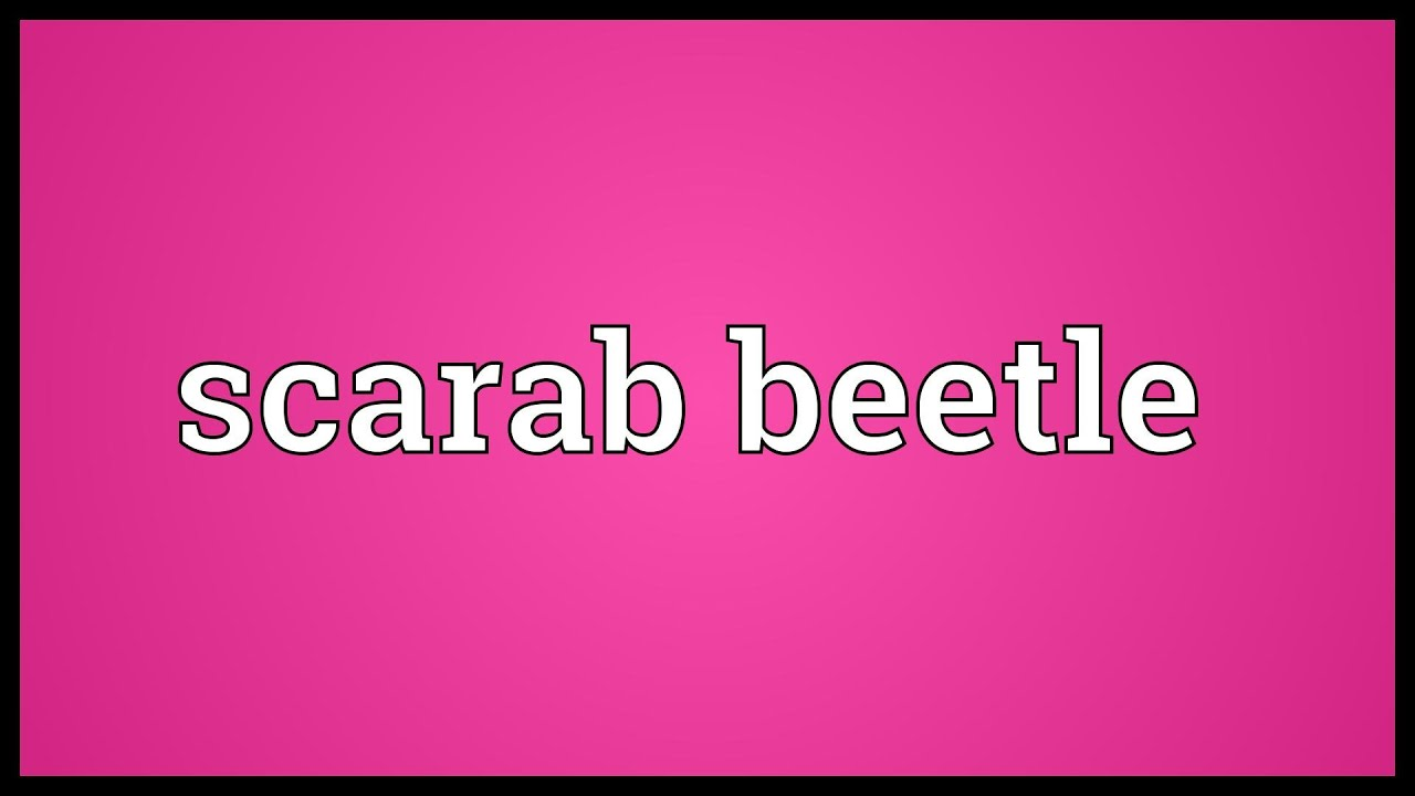 Scarab beetle meaning youtube biocorpaavc Images
