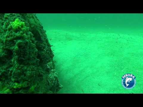 MB 47 Triggerfish 1 Reef 15 May 2013
