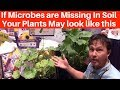 If Microbes are Missing In Soil Your Plants May Look Like This