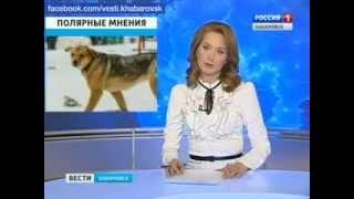 Вести-Хабаровска. Спор из-за бродячих собак