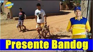Bora Brasil Recebe Presente do Bandog