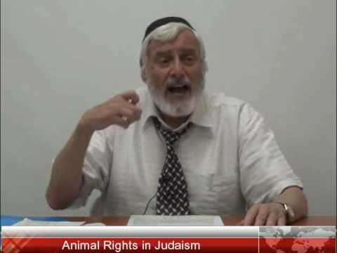 Animal Rights in Judaism - Apr 23, 2017