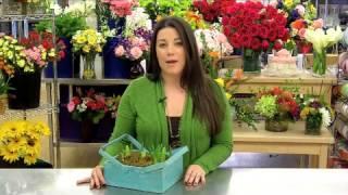 Spring Country Bulb Garden Care & Handling Tips Video