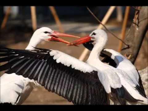 Строение перьев птиц   YouTube