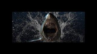 187 Strassenbande - HaifischNikez Allstars Typebeat