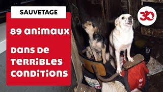 بالفيديو| بعد احتجازها لعامين.. تحرير 89 رهينة من الحيوانات في فرنسا