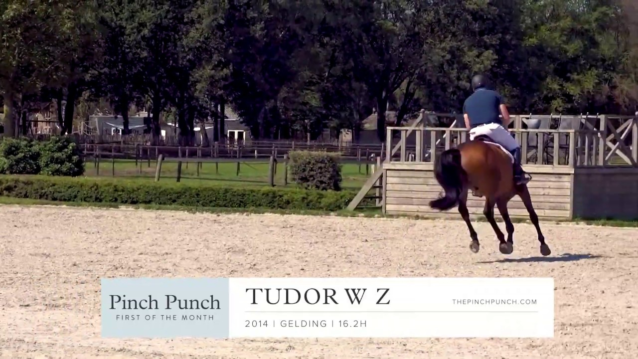 TUDOR - Profile Video | PPFM: September 2019