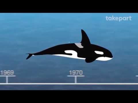 50 Years Of Marine Mammal Captivity In 4 Minutes | CAPTIVE | TakePart