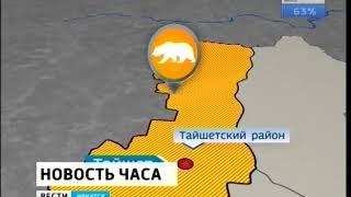 Медведь напал на людей в Тайшетском районе