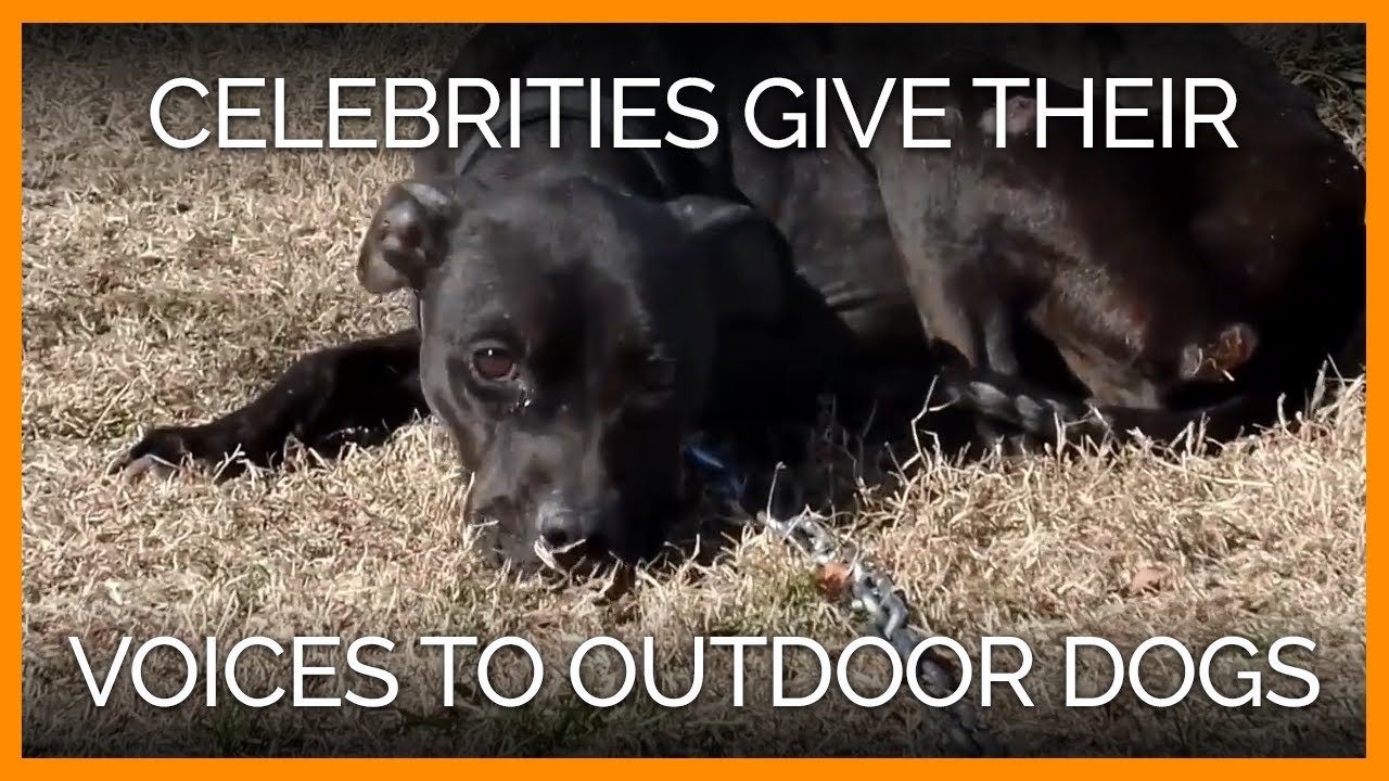 celebrities-help-these-outdoor-dogs-guilt-trip-their-neglectful-owners