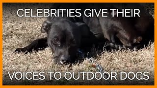 Celebrities Help These 'Outdoor Dogs' Guilt-T...