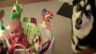 Постоянно плачет ребенок(Собака успокаивает ребёнка. Заходи на http://afunto.ru. Смешное видео каждый день., 2012-02-03T04:31:08.000Z)