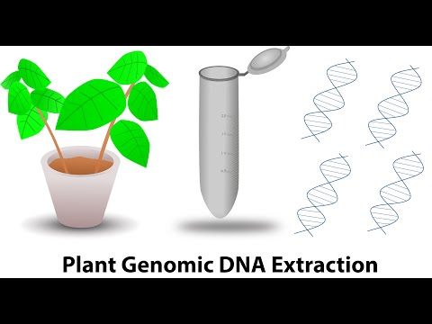 Plant genomic DNA extraction
