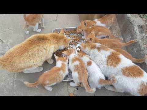 길고양이 밥주기