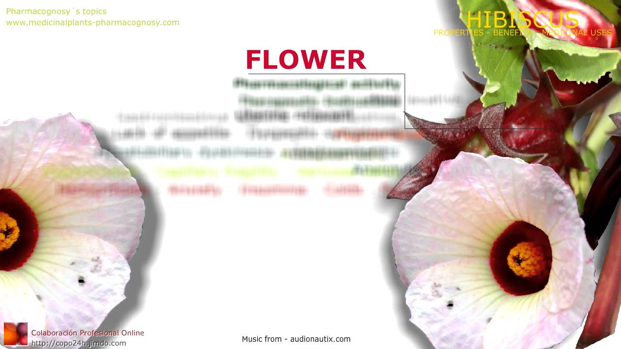 Hibiscus benefits roselle hibiscus sabdariffa plant benefits of hibiscus benefits roselle hibiscus sabdariffa plant benefits of flowers youtube izmirmasajfo Image collections