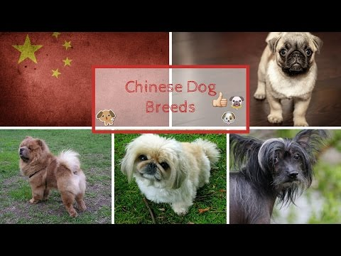 Chinese Dog Breeds