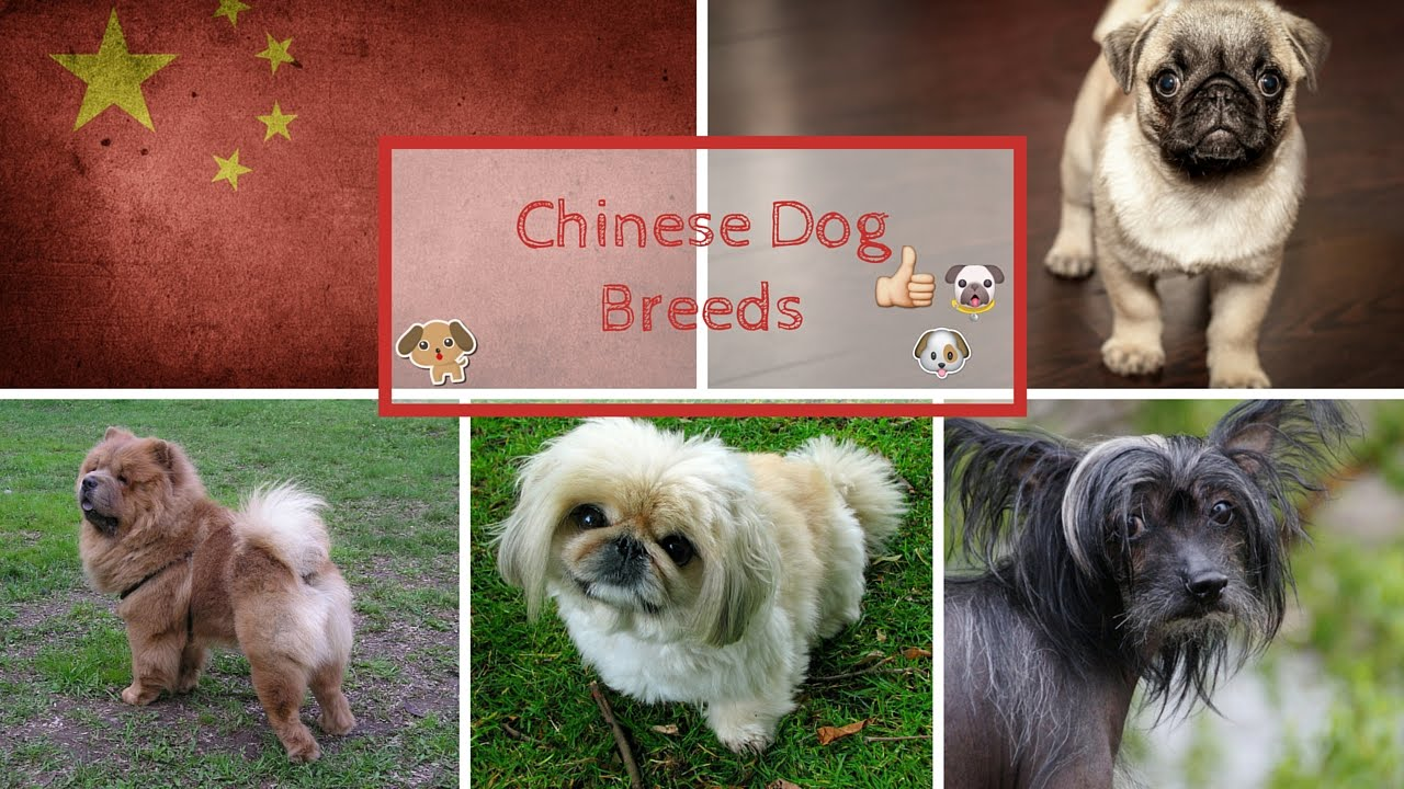 Breed Chinese Dogs Names