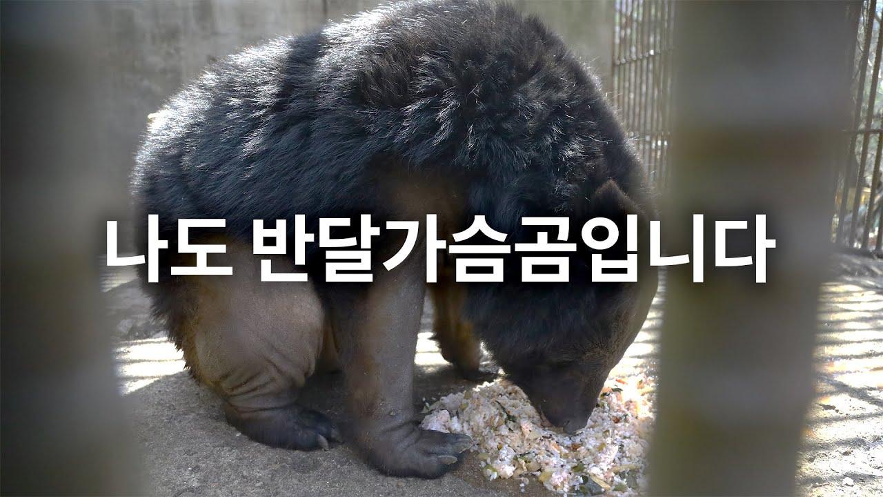 [사육곰]  반달가슴곰과 사육곰, 같은 생명 다른 무게 / 동물자유연대