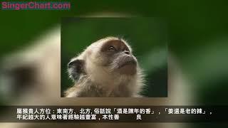喇嘛神預測,68年老金猴,2019年要留心一個人,對你害處不少 大師在這提醒屬猴人開運錦囊: 點擊↓↓↓下方圖片)直達奉請自己屬相配飾
