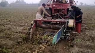 190 Adeel Ahmed agriculture farm @depalpur, pakistan