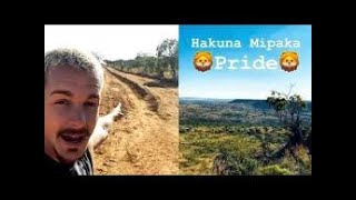 New Home for Lion Pride in Coming Months | Dean | Hakuna Mipaka | Love Animals | Save Animals