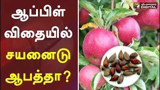 ஆப்பிள் விதையில் சயனைடு ஆபத்தா   Apple Seed   Australia   Apple Fruit