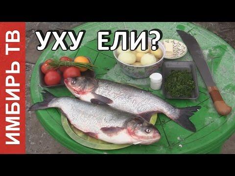 Уха из толстолобика - Имбирь ТВ