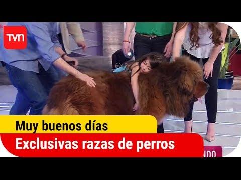 Los perros más exclusivos del mundo