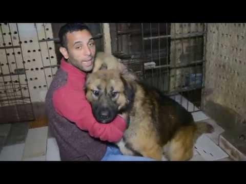 السبب الاساسي الي ممكن يجعلك تربى الكلاب # بعد مشاهده الفيديو ستذهب لتشترى كلب فوراً