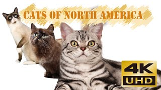 Cats of North America
