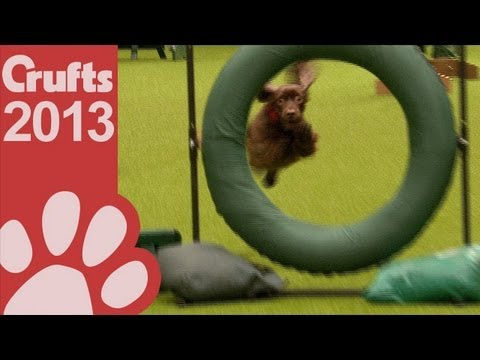 Agility - Crufts Large Novice and Medium ABC - Jumping - Crufts 2013