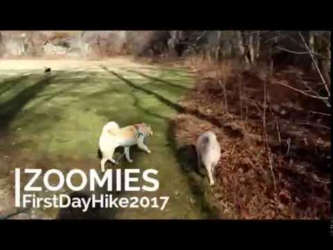 Shiba Inu Zoomies from First Day Hike 2017