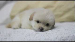 Cute puppy sleep Thumbnail