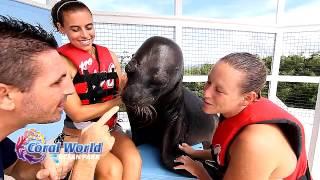 Coral World Ocean Park - Sea Lion Swim