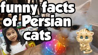 My Persian Cat | funny persian cat I funny facts about Persian cats I Persian Cat I Cute Persian Cat