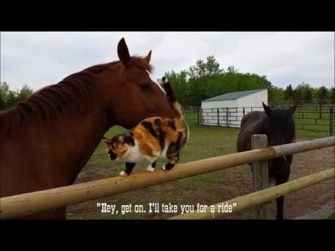 Horse offers cat a ride!