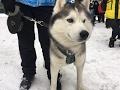 Гонки на собачьих упряжках прошли в Егорьевске