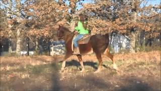 Sorrel Quarter Horse Gelding For Sale
