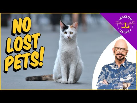 How to prevent and deal with lost pets!