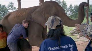 Świeżo urodziny słonik potrzebował pomocy, by przeżyć! [Weterynarz w dziczy]