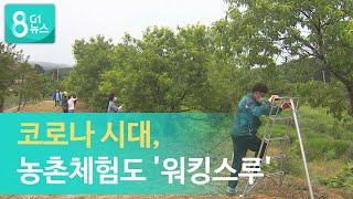 [G1뉴스]코로나 시대, 농촌체험도 '워킹스루'