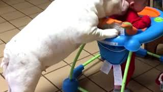 Tsados Amazing Video - Funny Dogs With Babys