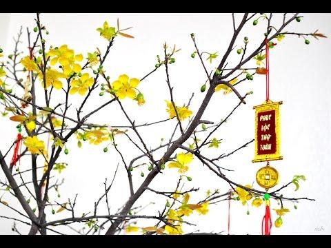 Hoa chưng ngày tết - ý nghĩa các loài hoa đem lại may mắn, thịnh vượng ngày tết