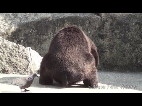 Can you pee while pooping? This bear can!