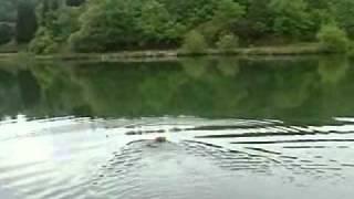 暑い真夏に水遊びです。もともとは英国ヨークシャー地方出身のカワウソ...