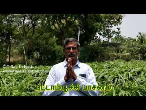 பட்ஜெட் பட்டாம்பூச்சி பாசனம்- கோ-4 | Budget Butterfly Sprinkler- CO-4 | Tamilnad Irrigation