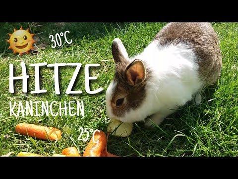 Kaninchen im Sommer - Was tun bei HITZE?! 🍉🐇 | Kaninchenstar