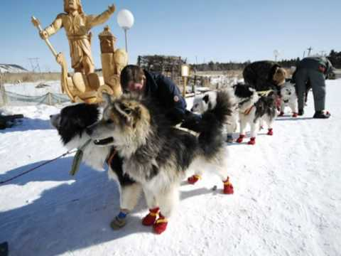 Arctic Travel photo-presentation. Dog sledding in Siberia.mpg
